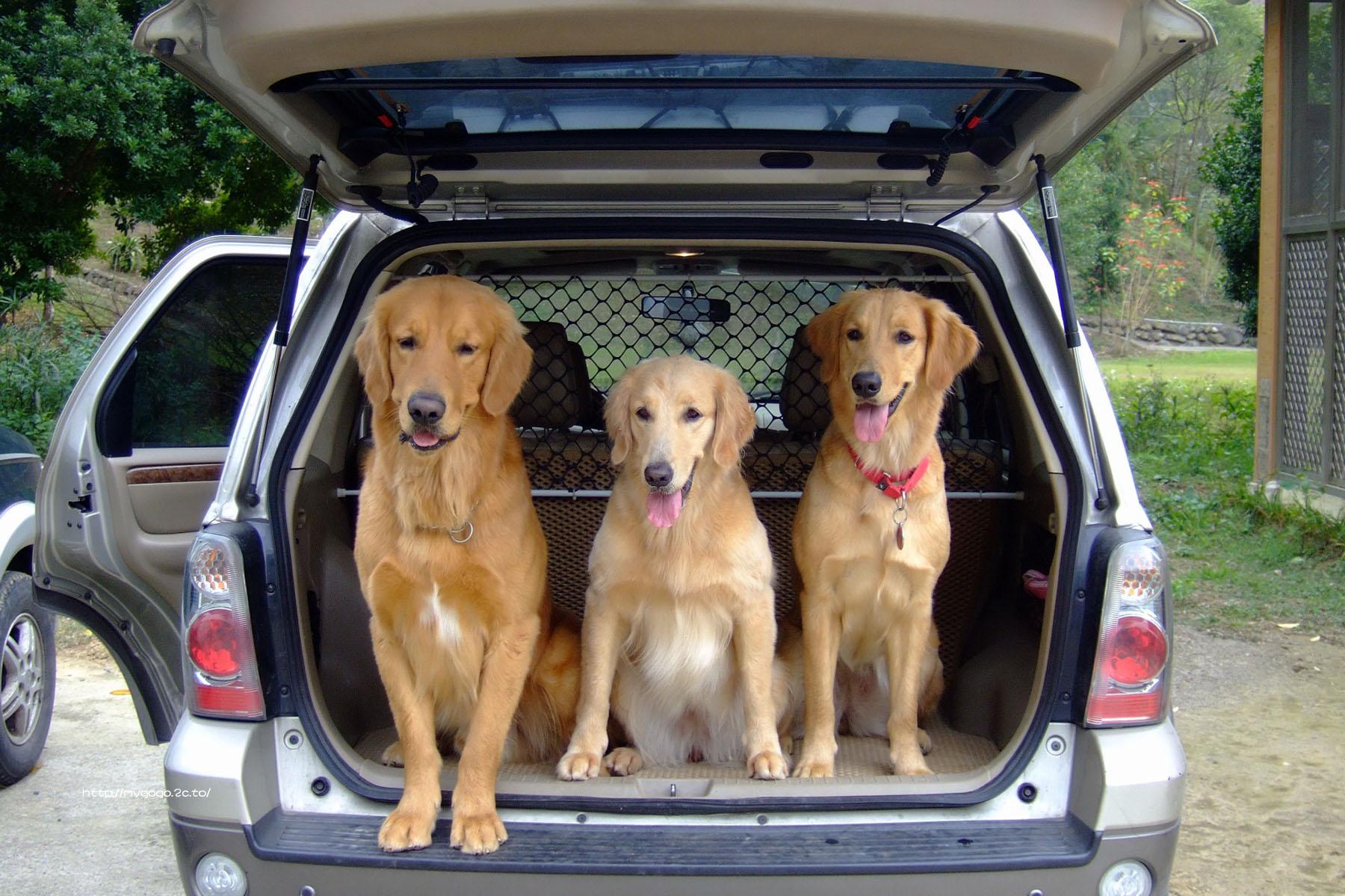Viajar con mascotas a Asturias